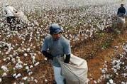 Centre eases export rules for cotton, yarn