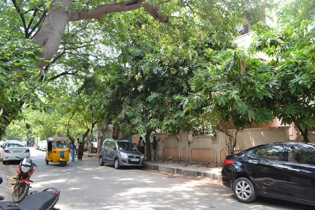 In the shade of living landmarks: Chennais tree-huggers get literal