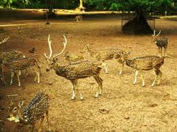 Deer to be rehabilitated from Hill Palace in Kochi